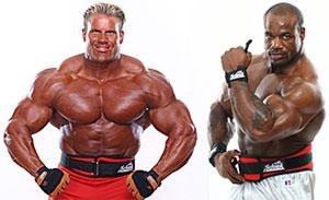 schiek weight lifting belt